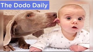 Dogs Love New Baby Brother | Best Animal Compilation | The Dodo Daily