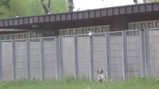 LPT-Beagle-18.05.2013