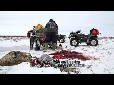 11 Caching and Transportation - Hunting Caribou in the Fall