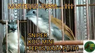Download Mp3 Suara Burung Sniper