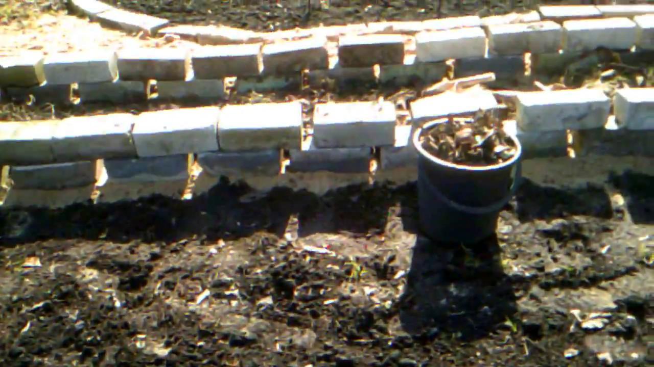 Как сделать теплую грядку для огурцов весной фото 299