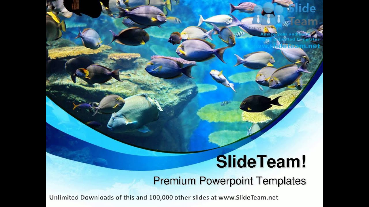 Fishes inside sea animals powerpoint templates themes and fishes inside sea animals powerpoint templates themes and backgrounds ppt layouts youtube toneelgroepblik Gallery