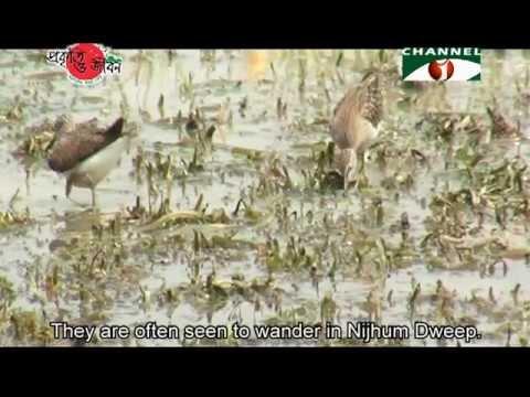 Nature and Life - Episode 135 (Biodiversity of Nijhum Dweep)