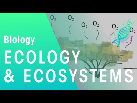 Adapting and Living Together: Ecology and Ecosystems| Biology for All | FuseSchool