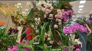 Orchid Show, Boca Raton Orchid…