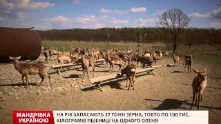 видео Відпочинок в Калінінградській області