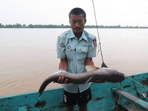 Monster Fish, Mekong River, Laos 2017
