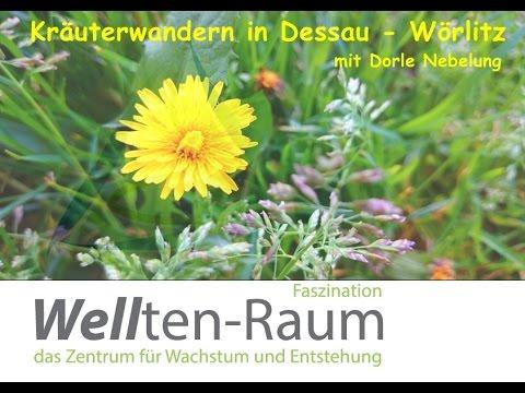 Kräuterwanderung mit Dorle in Dessau-Wörlitz