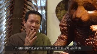中文 千年癭木奇樹瘤 影片