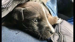 Soğuktan tir tir titreyen minicik köpeğin son durumu