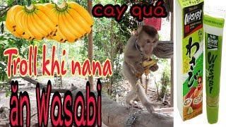 Troll Khỉ Ăn Chuối Wasabi Và Cái Kết Cay Đắng Monkey Wasabi Bananas And Bitter Endings