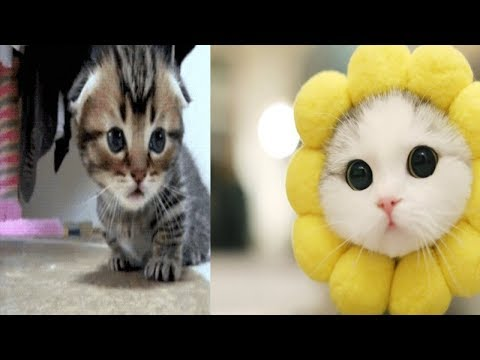 Tiny cute kittens Will Make Your Day Awesome - Felis catus