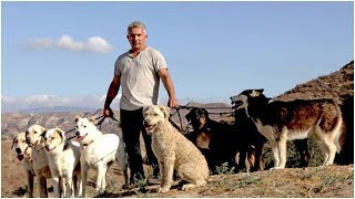 Dog Whisperer Cesar Millan Wakes In Psych Ward After Failed Suicide. Now Has New Leash On Life.