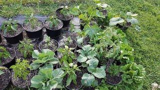 Instruktaż - Uprawa warzyw w donicach | Pomidor, burak, sałata, kapusta, seler i nie tylko