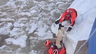 Watch: Dramatic Rescues Save Dogs From Icy Waters