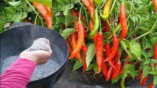 Adubo Caseiro Para Cultivar Pimentas