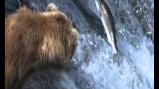 Фильм Живая природа России..wmv
