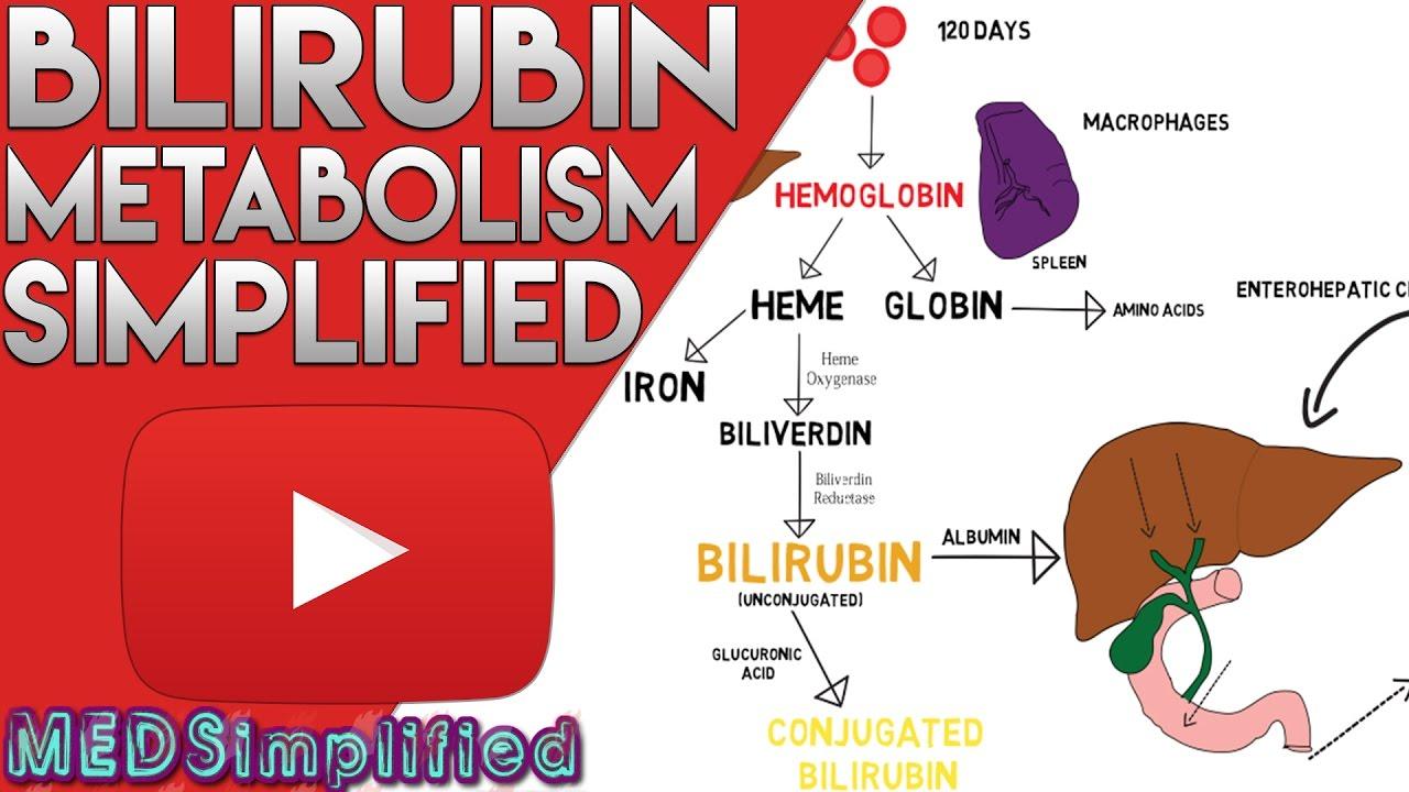 bilirubin metabolism simplified - youtube, Skeleton