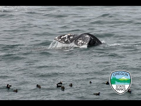 March 25th Live from the Depoe Bay Whale Watching Center. Spring Whale Watch Week Day 2