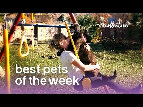Best Pets of the Week - PLAYGROUND PUP | The Pet Collective