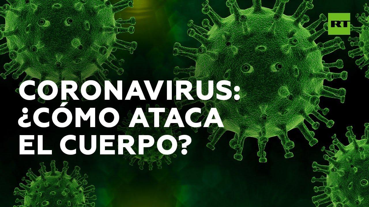 Así es la batalla entre el coronavirus y nuestro sistema inmunológico | RT Play