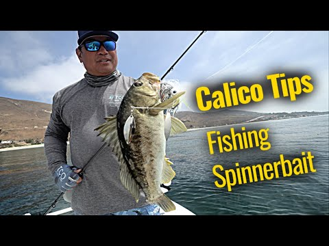 Calico Bass Tips | Benny Florentino
