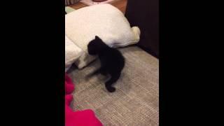 友人のマンションの駐車場に捨てられていた黒猫。 トラくんと名付け、大...