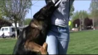 Schutzhund Equipment ~ Bite Suit Tug 2 Handles
