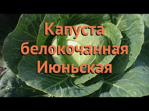 Капуста белокочанная Июньская (iyunskaya) 🌿 Июньская обзор: как сажать, семена капусты Июньская