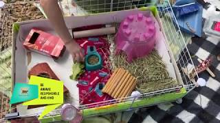 Guinea Pig Cage Cleaning