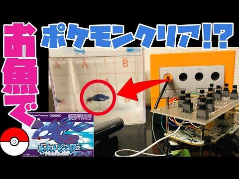 【2446h~ルネジム編】ペットの魚でポケモンクリア_Clear the pokemon with fish【作業用BGM】