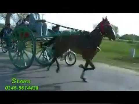 WAQAR YOUNUS HORSE DHOOM JUMMA TRY 24.03.17