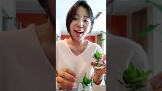 업사이클링 수경재배 스킨답서스 캔맥주 양념병 활용!!!