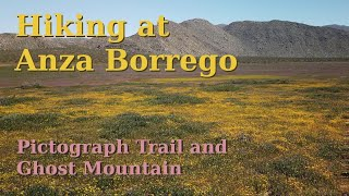After a lot of driving around I head back out to Anza Borrego to fi...