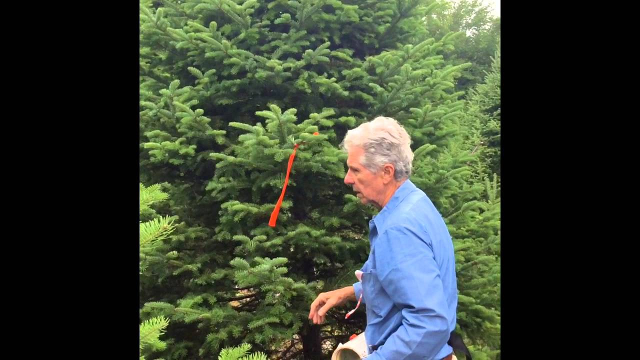 Dees Nursery Christmas Tree Farm