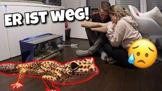 Unser Gecko ist abgehauen ! 😨😫😭 | BibisBeautyPalace
