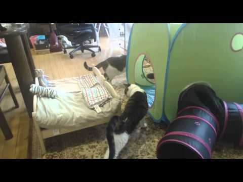 ?nekonu?Cats and IKEA tent BUSA (no sound) & nekonu?Cats and IKEA tent BUSA (no sound) - YouTube
