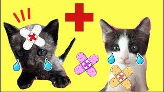 The Boo Boo Story from Luna y Estrella mis gatitos bebés / Funny cats