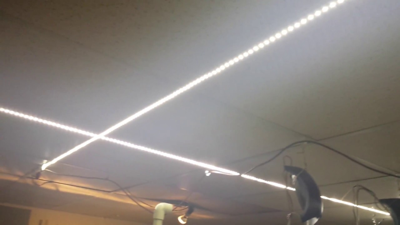 Led Strip Lighting On Ceiling In Fishroom