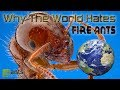 WHY THE WORLD HATES FIRE ANTS