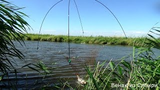 Риболовля на павук - підйомник, в очеретах ловимо сазанчиков!