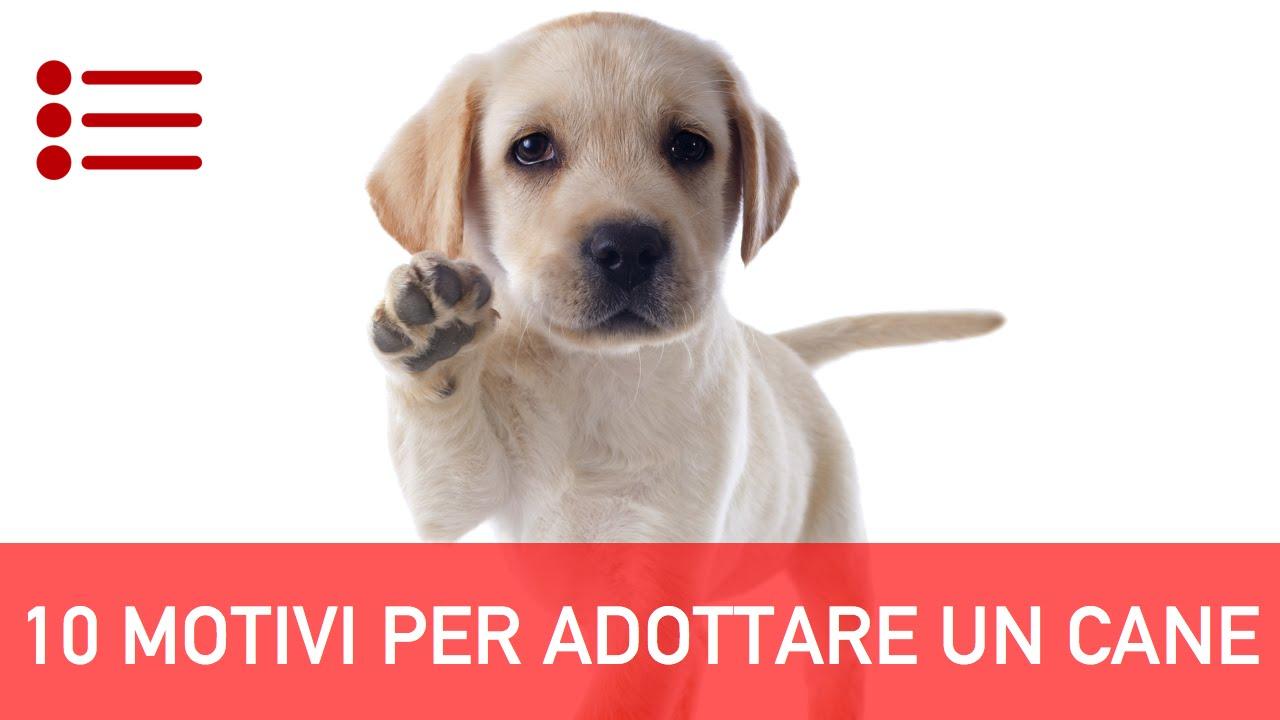 10 motivi per adottare un cane - youtube