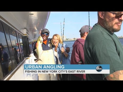 Urban Angling: Fishing on the East River | ABC News