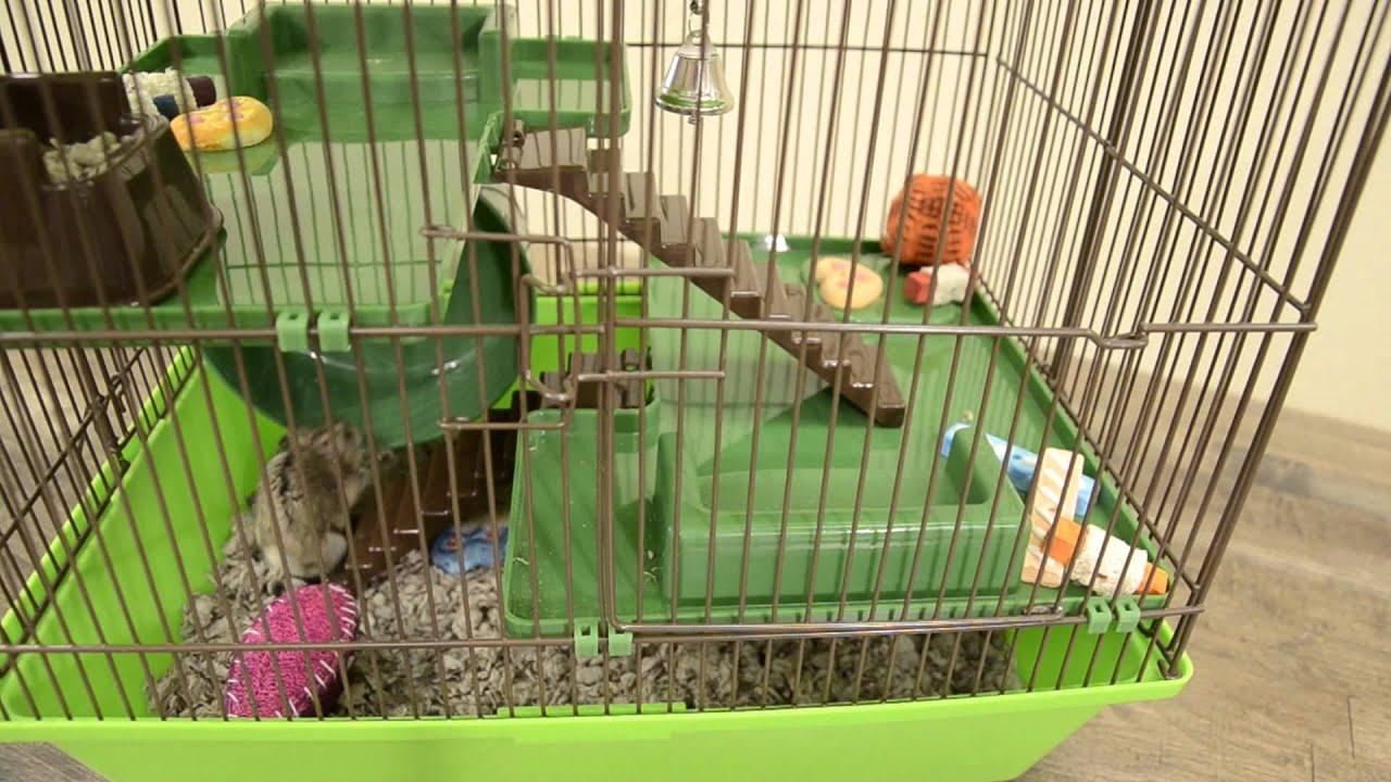 Animal House Cage Youtube