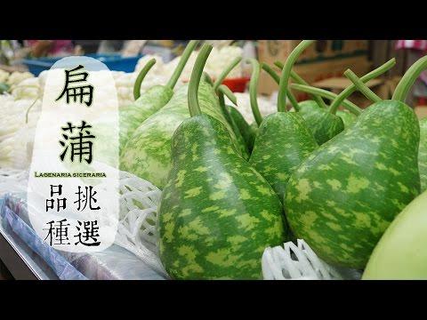 【夏】扁蒲的挑選方法