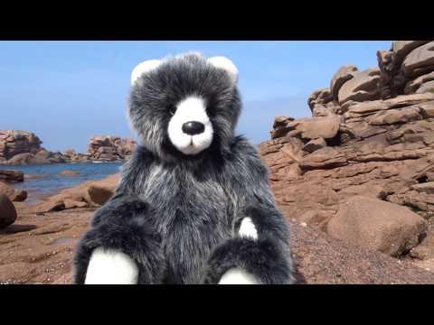 Un ours découvre la mer !