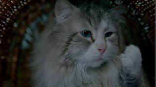 Девять жизней (2016)   Анонсы Фильмов