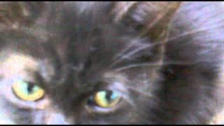 черный котенок.mp4