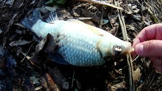 Рыбалка весной 2020 активный клев КАРАСЯ В ЭТОМ ОЗЕРЕ МНОГО РЫБЫ