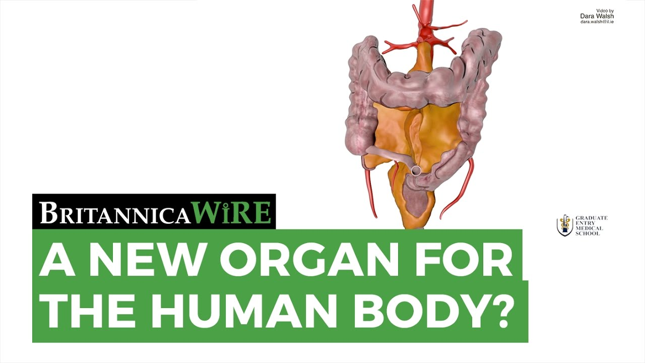 A New Organ for the Human Body? - YouTube